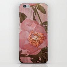 Peony in Bloom. iPhone & iPod Skin