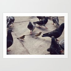 I envy birds Art Print