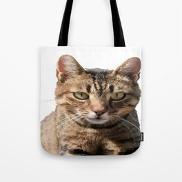 Portrait Of A Cute Tabby Cat With Direct Eye Contact Isolated Tote Bag