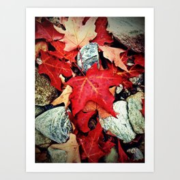Red Leaves on the Rocks Art Print