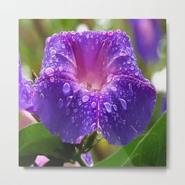 Morning Glory Petals and Dew Drops Vector Metal Print
