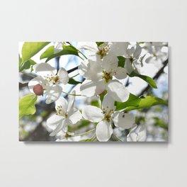Crabapple Flowers 05 Metal Print