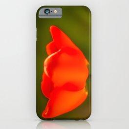 La tulipe orange iPhone Case