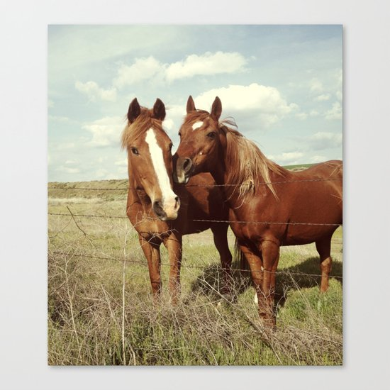 Horse Affection Canvas Print