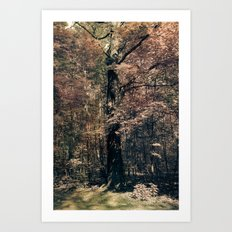 Tales from the trees 3 Art Print