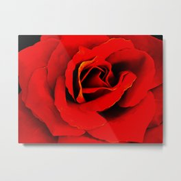 Red Rose A 218 Metal Print