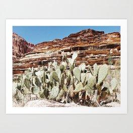 Cactus and Tapeats Art Print