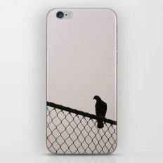 Pigeon Fence iPhone & iPod Skin