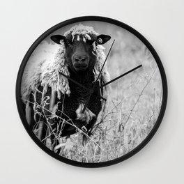 Sheep with sharp eyes Wall Clock