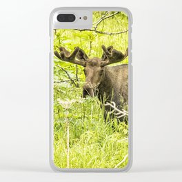 Bull Moose in Kincaid Park, No. 2 Clear iPhone Case
