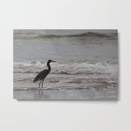 Reddish Egret in the Surf Metal Print
