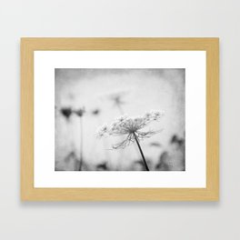 AFE Queen Anne's Lace BW Framed Art Print