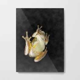 Frog on Window 1 Metal Print
