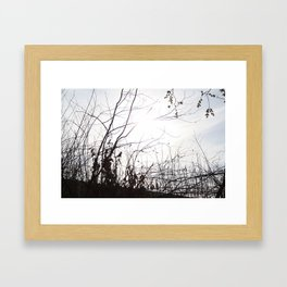 Woods II Framed Art Print