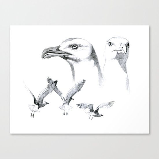 Great Black-backed Gull - Larus marinus   SK043 Canvas Print