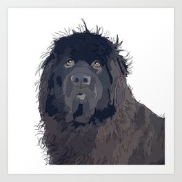Newfoundland Dog Art Print