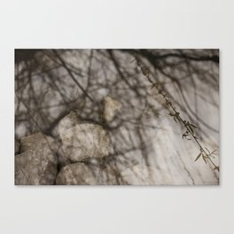Weeping Willow Memories Canvas Print