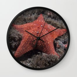 Starfish, (Sea Star)  Wall Clock