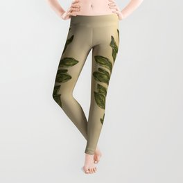 Oregano Leggings