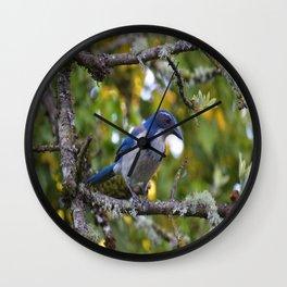 Jay's Perch  Wall Clock