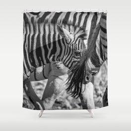 B&W Zebra 2 Shower Curtain