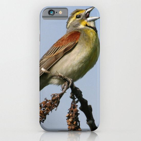 Dickcissel iPhone & iPod Case
