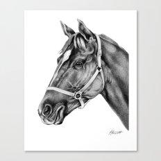 Affirmed (US) Thoroughbred Stallion Canvas Print