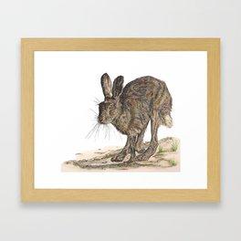 Hare II Framed Art Print