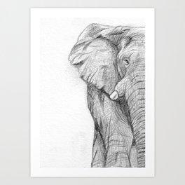 Elephant Graphite Sketch Art Print