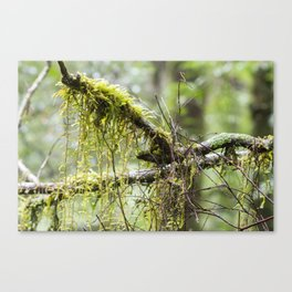 Nature's Delicate Beauty Canvas Print