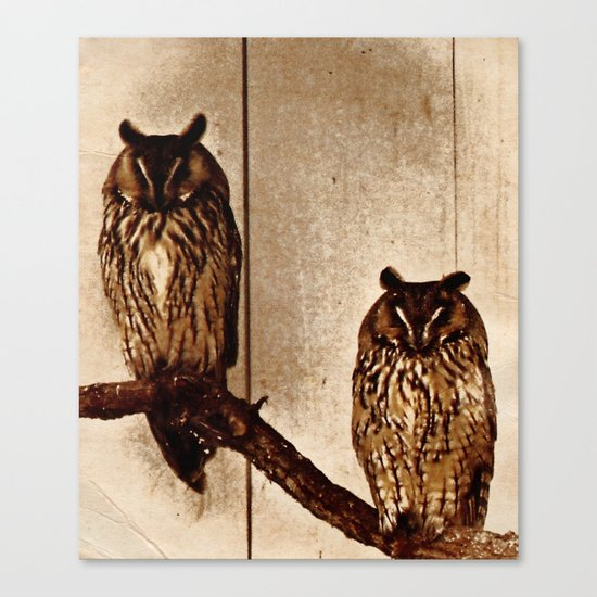 Couldn't Give Two Hoots! Canvas Print