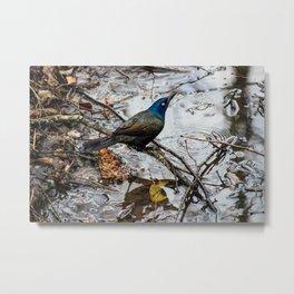 Un-Freebird Metal Print