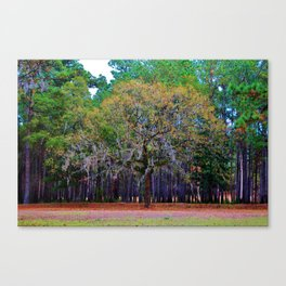 Pine Tree Landscape Canvas Print