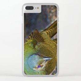 Satin Bowerbird (Ptilonorhynchus Violaceus) Clear iPhone Case