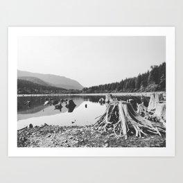 Sea of Stumps Art Print