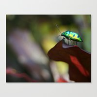 philippines Canvas Prints featuring Iridescent Bug (Philippines) by Dr. Tom Osborne