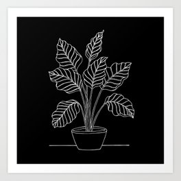 Caladium Plant Black & White Art Print