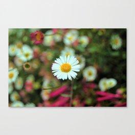 Daisy Bloom Canvas Print