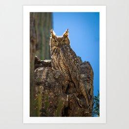 Elf Owl #2 Art Print