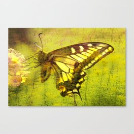 Abstract of A Tiger Butterfly Canvas Print