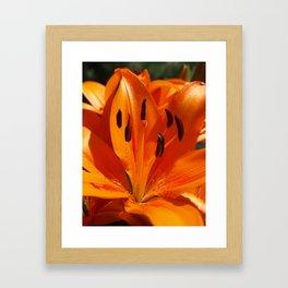 Tangerine Dreams Framed Art Print