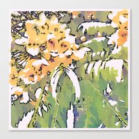cassia beck Canvas Prints featuring Cassia Leptophylla by Maleeka Marsden