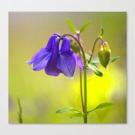 Purple Columbine In Spring Mood Canvas Print