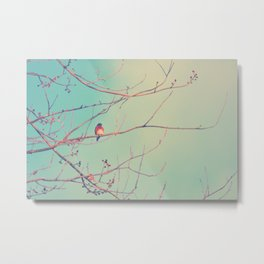 Bluebird Blue Metal Print