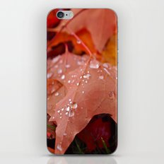 Autumn dew iPhone & iPod Skin