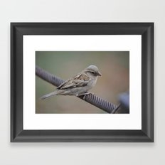 Pilanesberg Bird 01 Framed Art Print