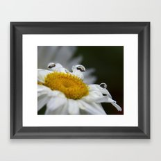 Daisy reflections Framed Art Print