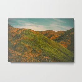 California Poppies 037 Metal Print