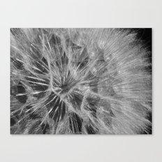 dandelion 2017 Canvas Print