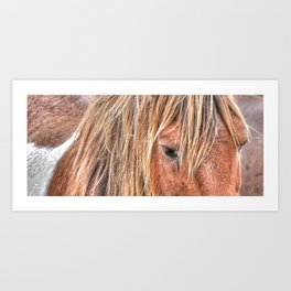 Shaggy Island Pony Art Print